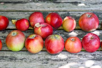 Erste eigene Äpfel im Herbst aus dem Garten, unterschiedlich gross, ungenormt