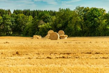 Tas de ballots de paille et de foin cylindrique sur un champs en été en Moselle
