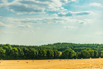 Paysage d'une forêt près d'un champ de blé coupé avec les ballots de paille cylindrique