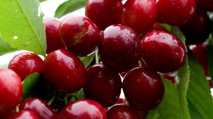 Makro aufnahme auf red cherries.