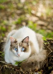 gato no ninho
