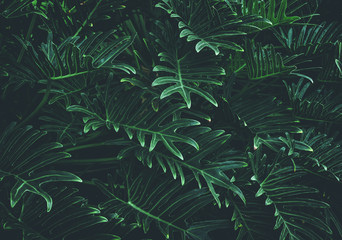 Tropical leaves background,jungle leaf