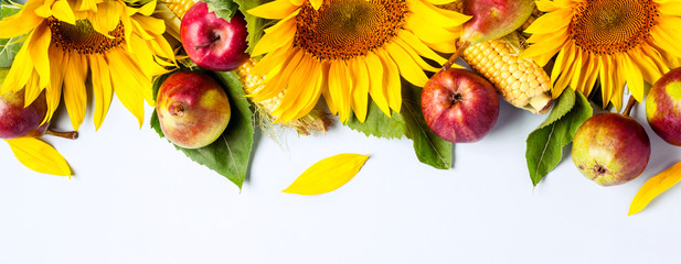 Autumn background. Border of sunflower, corn and pears. Harvest holiday concept
