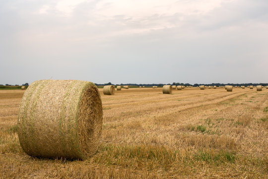 Harvested field in late summer with straw bales ready for collection