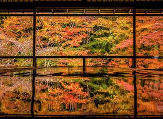 Poster de jardin Kyoto kyoto autumn