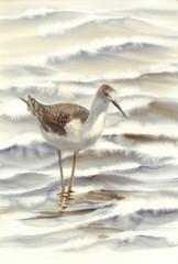 a bird walking by the sea watercolor
