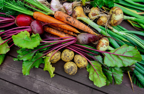 Freshly harvested vegetables on wooden background