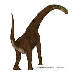 Giraffatitan Dinosaur Tail with Font - Giraffatitan was a herbivorous sauropod dinosaur that lived in Africa during the Jurassic Period.
