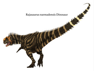 Rajasaurus Dinosaur Tail with Font - Rajasaurus was a carnivorous theropod dinosaur that lived in India during the Cretaceous Period.