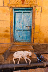 Schlafender Hund in Indien