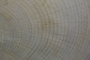 tree cut. annual ring. texture