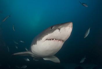Shark swims by camera