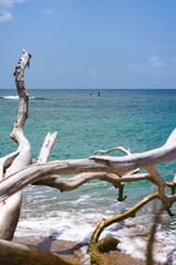 Dried branches on the Cocoa beach martinique.