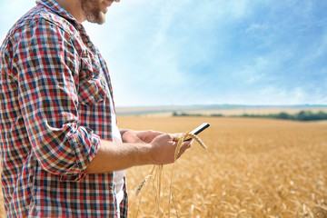 Young man with smartphone in grain field. Cereal farming