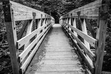 Bridge along the Bagby Hotsprings trail in Oregon