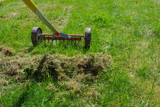 Cleaning up the grass with a rake. Aerating and scarifying the lawn in the garden. Remove old grass. Manual scarification of lawn with fan rakes and wheels.