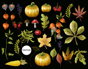 Big set of autumn leaves, fruits, berries and vegetables. Vector illustration.