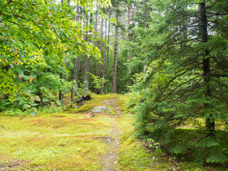 Forest Path in Green Mountains of Vermont