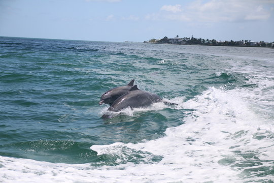 Dolphins riding a wake