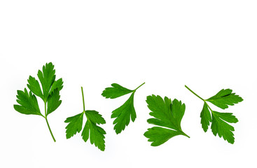 flat-leaved parsley leaves on white background with copy space