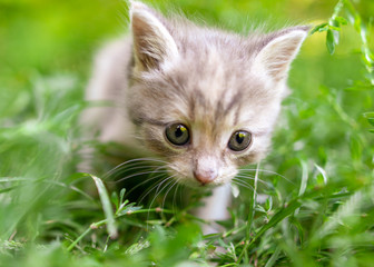 Portrait of a kitten in green grass