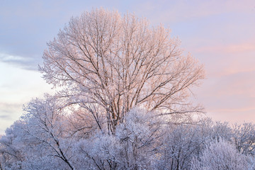 picturesque view of snow covered tree branches on winter sky background