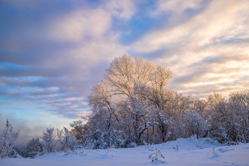 picturesque view of snow covered trees in countryside at sunset