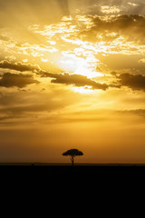 Beautiful sunset with a single tree on the African savannah