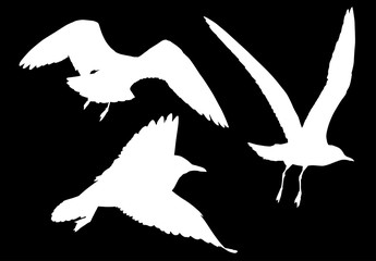 set of three white seagulls illustration