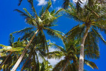Palm branch and blue sky