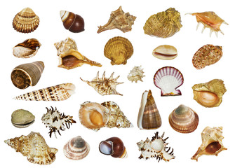 collage of sea shells of different shapes on white background isolated