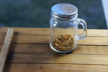 Mealworms in a pepper shaker jar