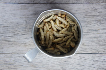 Waxworms in a measuring cup