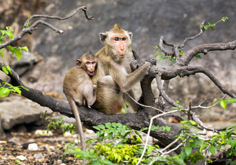 Mother and baby monkeys in the wild.