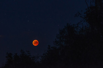 Total lunar eclipse in the night of July, the 27th 2018 with red moon and stars over the dark silhouettes of tree