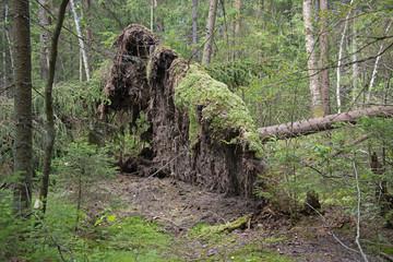 Natural landscape - windbreak