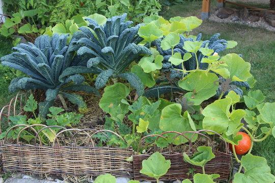 Gemüsebeet Mischkultur Permakultur