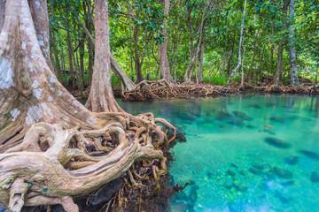Wooden bridge to the jungle, Tha pom mangrove forest, Krabi,Thailand