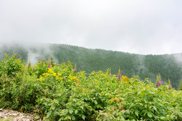 Mountains, forest, fog