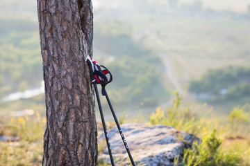 Nordic walking sticks leaning against a tree. beautiful natural landscape, open spaces. concept: travel and active lifestyle