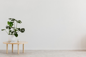 Plant on wooden table against white empty wall with copy space in living room interior. Real photo. Place for your furniture Wall mural