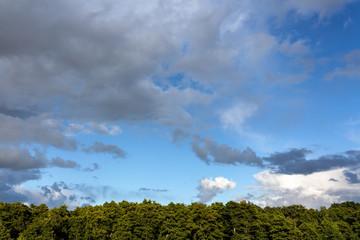 Fotoväggar - Cloudy sky over a forest