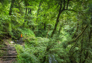Man in orange rain jacket standing on stone steps in thick green forest of the Annapurna region of Nepal. Wall mural