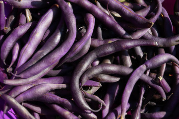 A bunch of green beans in an unusual purple color.