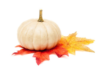 White Pumpkin with Autumn Leaves Isolated on White Background