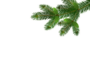 Green realistic branch of fir or pine close-up with cones. branched out. Isolated on white background. illustration