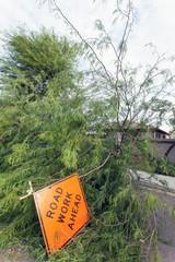 Fallen old mesquite tree after annual summer monsoon storm in Phoenix, Arizona