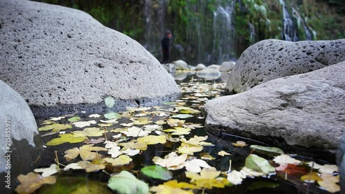 Fotolia.com & Pool of water covered with fall leaves in the foreground ...