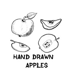 Apples, apple slices. Sketches of fruits. Vector hand drawn illustration.