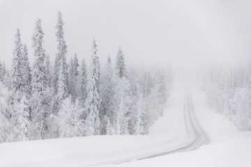 Icy road in the misty forest, Levi, Kittila, Lapland, Finland, Europe